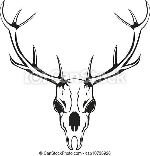 skull of deer with horns vector an illustration of skull of rh canstockphoto com deer skull vector image deer skull vector image
