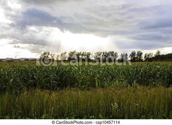 Sky light over fields - csp10457114