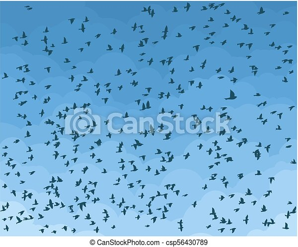 Sky with birds. - csp56430789
