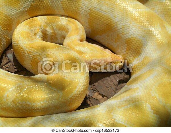 albino slange
