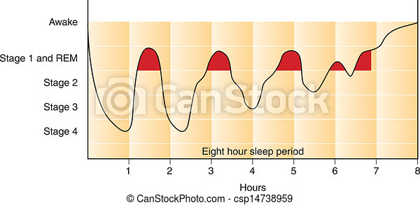 Sleep cycle graph - csp14738959