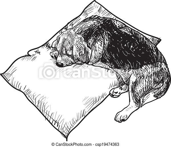 Sleeping beagle - csp19474363