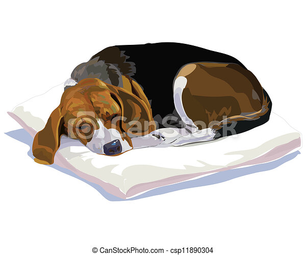 Sleeping Beagle - csp11890304