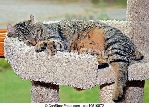 Sleeping Cat - csp10510872