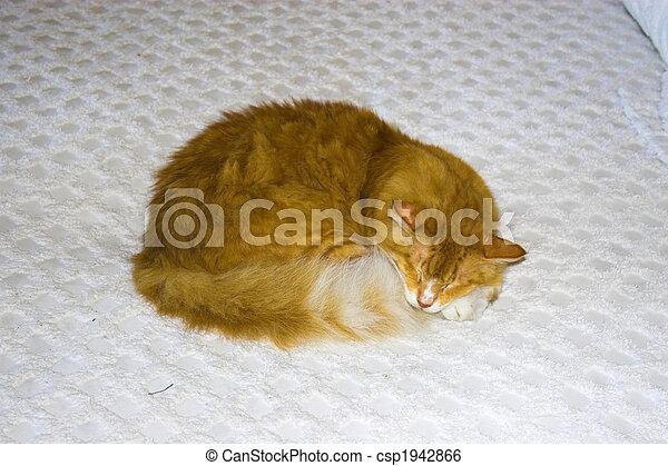 Sleeping cat - csp1942866