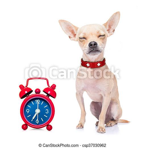 sleeping dog - csp37030962