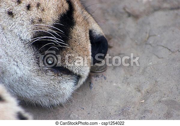 Sleeping feline muzzle - csp1254022