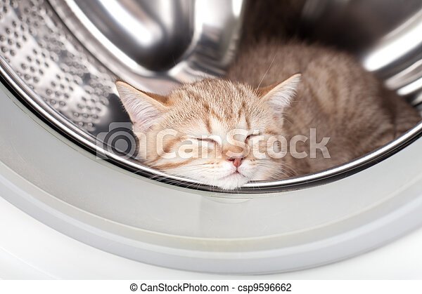 sleeping kitten lying inside laundry washer - csp9596662