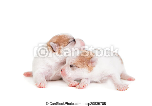 Sleeping Newborn Puppy on White - csp20835708