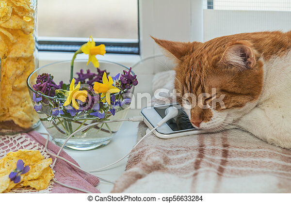 Sleeping red-white cat on mobile phone and headphones, delicious nutritious cereal breads and spring flowers on windowsill - csp56633284