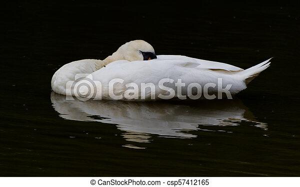 The Sleeping Swans >> Sleeping Swan Reflection