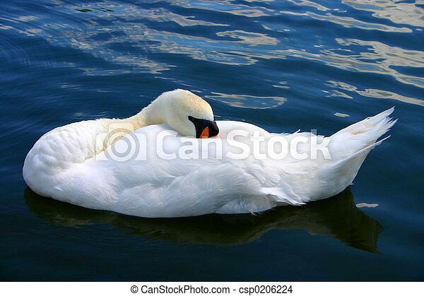 The Sleeping Swans >> Sleeping Swan