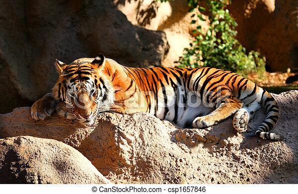 File:Sleeping tiger-2.jpg - Wikimedia Commons