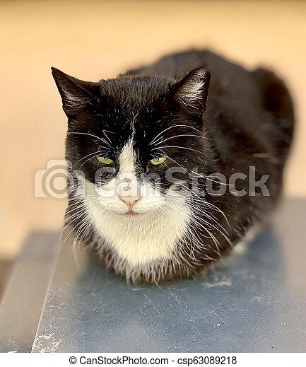 Sleepy cat resting on wall - csp63089218