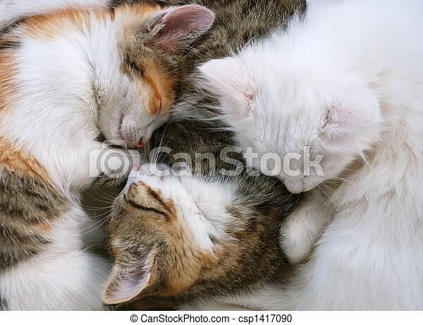 Sleepy cats - csp1417090