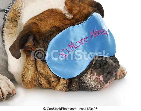 sleepy dog - csp4423438