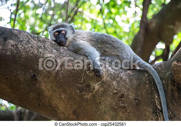 Sleepy Monkey - csp25432561