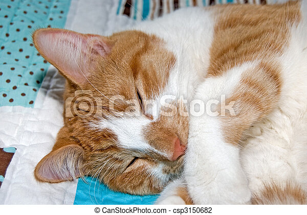 Sleepy Time - csp3150682