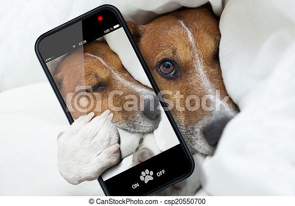 sleepyhead, selfie, chien - csp20550700