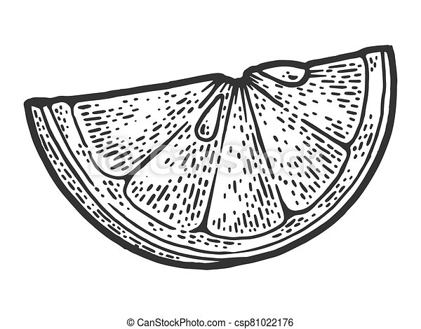 slice of lemon sketch engraving vector illustration. T-shirt apparel print design. Scratch board imitation. Black and white hand drawn image. - csp81022176