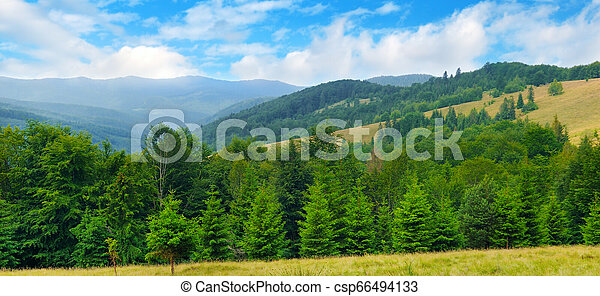 Slopes of mountains, coniferous trees and clouds in the sky. Wide photo. - csp66494133