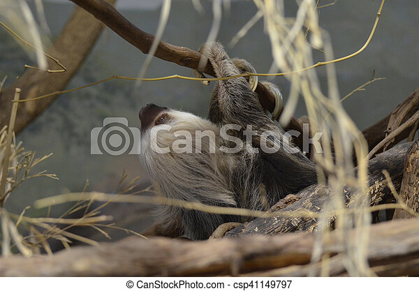 sloth hanging from a tree branch sloth hanging upside down from a