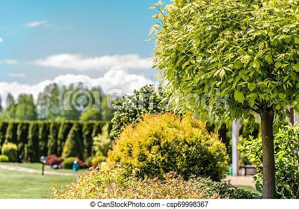 Small Backyard Garden - csp69998367