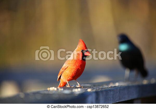 Small Birds - csp13872652