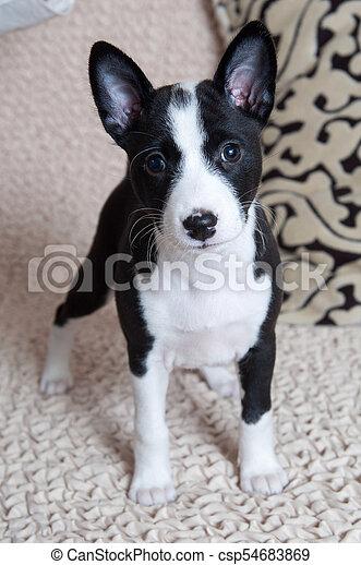 svart Puppy
