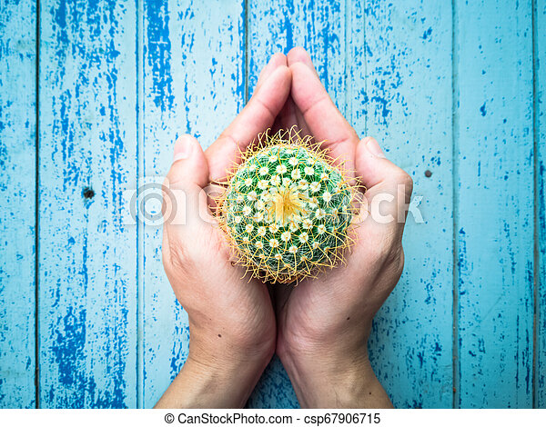 Small cactus in the hands of men, environmental care concept - csp67906715