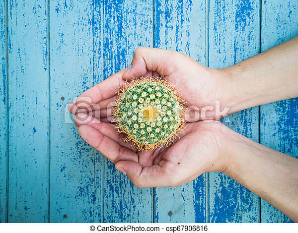 Small cactus in the hands of men, environmental care concept - csp67906816