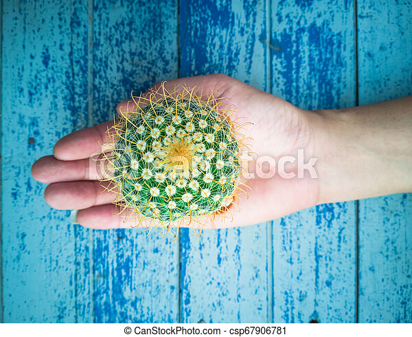 Small cactus in the hands of men, environmental care concept - csp67906781
