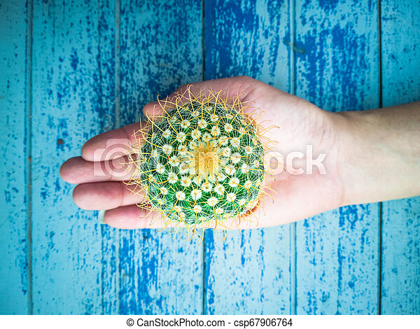 Small cactus in the hands of men, environmental care concept - csp67906764