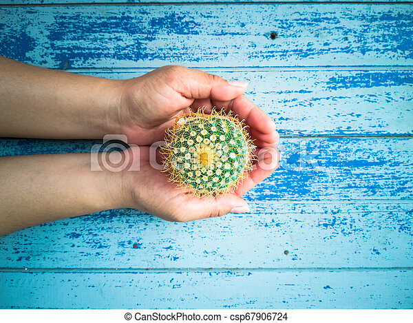 Small cactus in the hands of men, environmental care concept - csp67906724