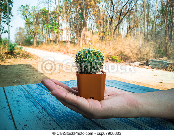 Small cactus in the hands of men, environmental care concept - csp67906803
