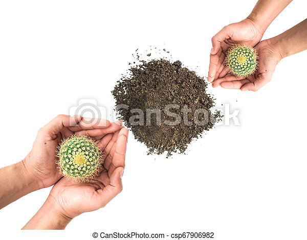 Small cactus photos in the hands of men separated on a white background - csp67906982
