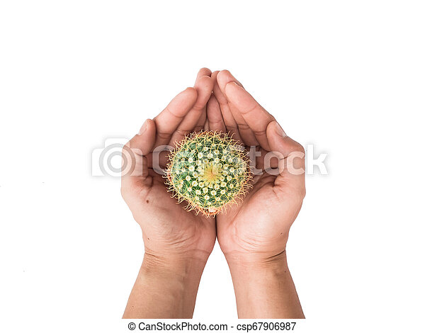 Small cactus photos in the hands of men separated on a white background - csp67906987
