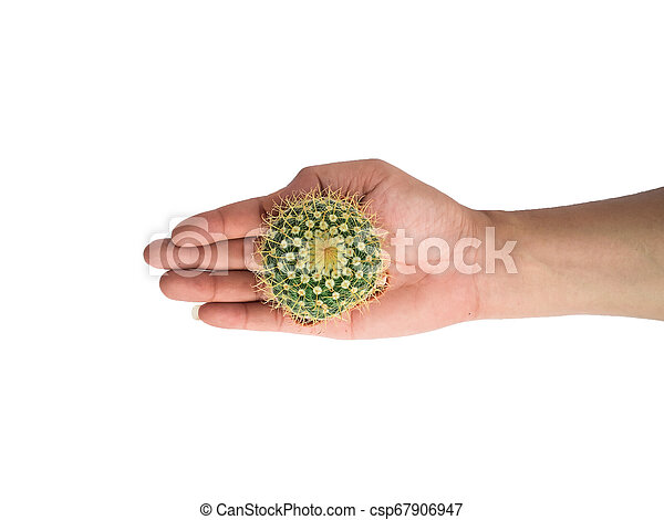 Small cactus photos in the hands of men separated on a white background - csp67906947