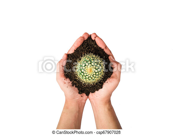 Small cactus photos in the hands of men separated on a white background - csp67907028