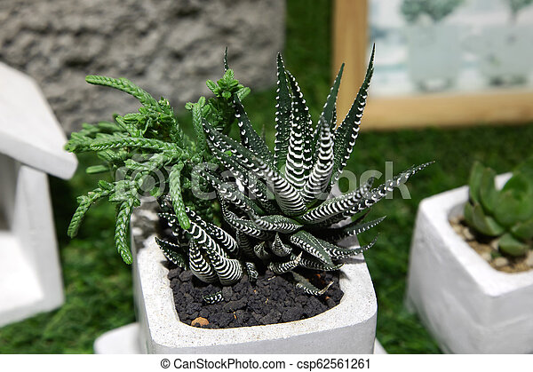 Small Cactus Succulents In Pot Cactus And Succulent Plants In Pot Outdoor Potted Cactus House Plants Canstock