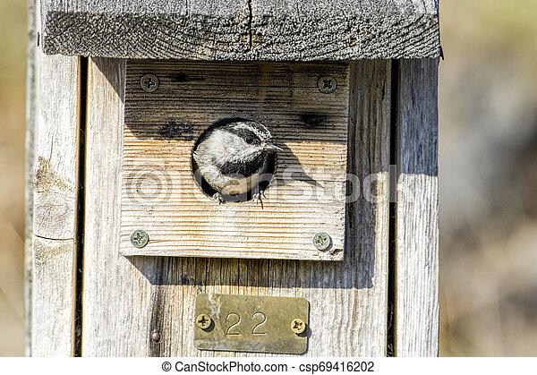 Small chickadee in a birdhouse. - csp69416202