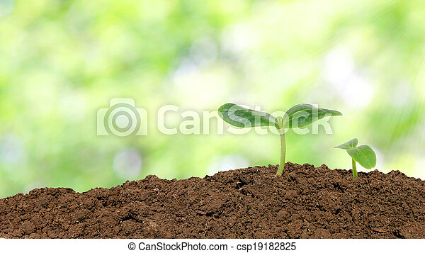 Small cucumber seedling over sunlight background - csp19182825