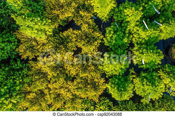 Small Decorative Garden Plants For Sale - csp92043088