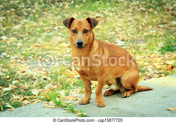 Small dog sitting in the garden - csp15877720