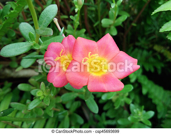 Small flower garden in beautiful bright colors. - csp45693699