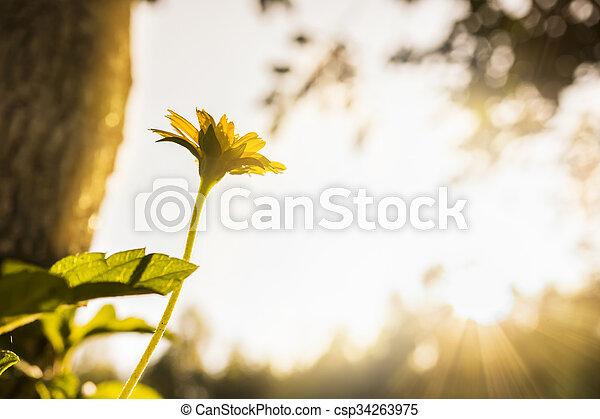small flower - csp34263975