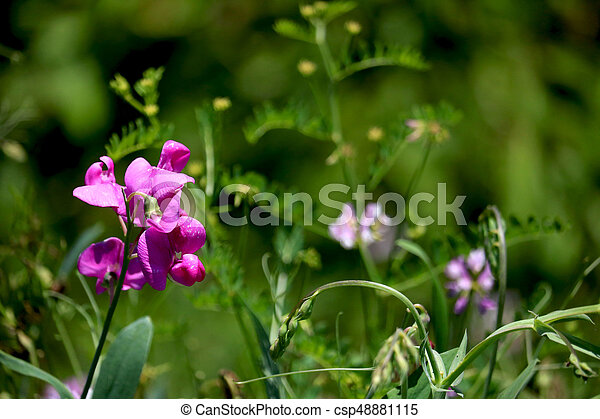 Small flower - csp48881115