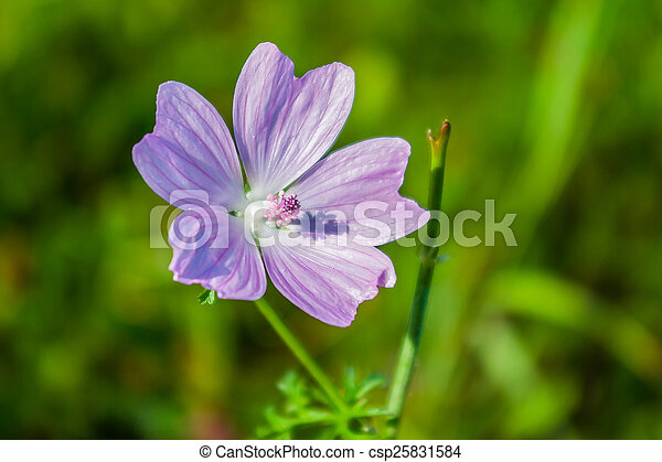 Small flower - csp25831584