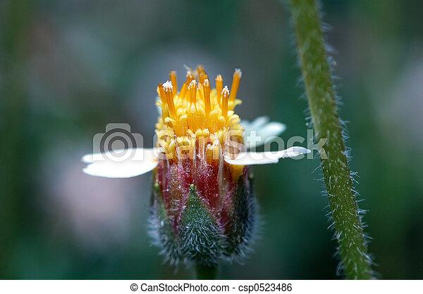 Small flower - csp0523486