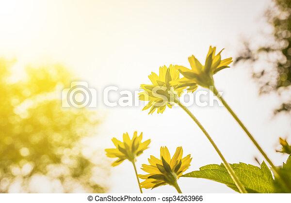 small flower - csp34263966